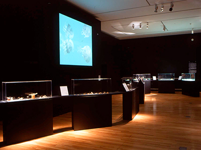 exhibition view, The Glass Menagerie, Design Museum London