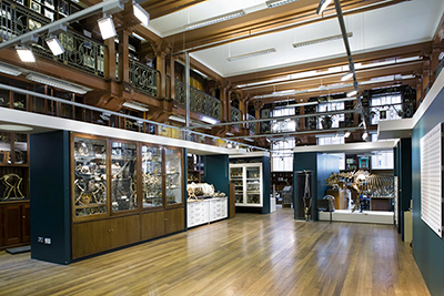 Grant Museum of Zoology, University College London, view of central space; design by Calum Storrie